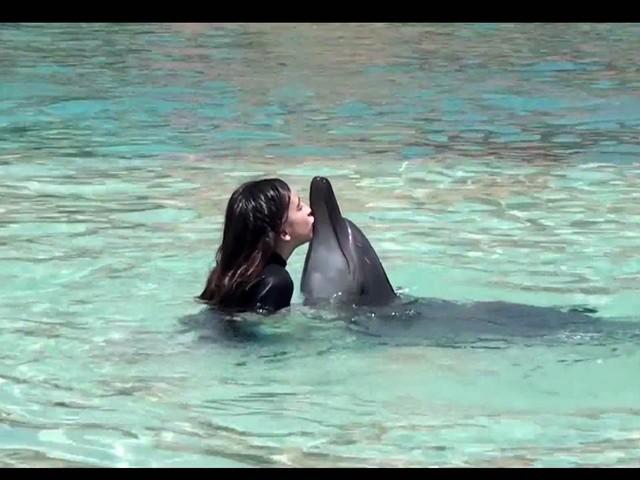 Dolphin Encounter Atlantis Dolphin Bay Swim With The Dolphins Dubai Timings Entry Fee