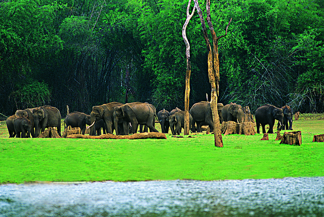 eravikulam_national_park
