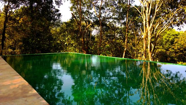 Wayanad_Wild_-_swim_between_the_trees