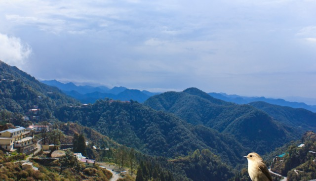 Ashirwad hotel spa mussoorie room rates reviews deals - Mussoorie hotels with swimming pool ...
