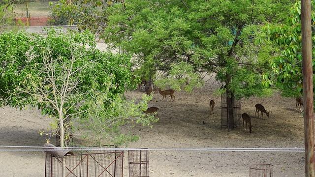 deer-park2
