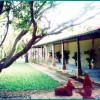 Indeco-mahabalipuram-greenary
